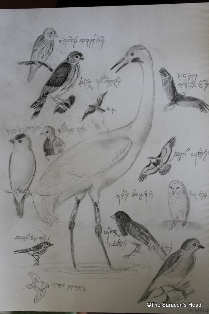 6 Letter Birds Name